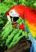 Macaw Dream