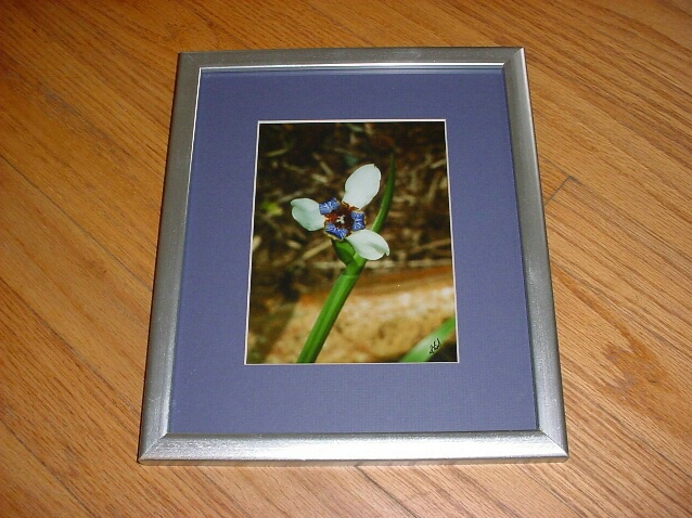 Hawaiian Orchid - ID: 681591 © Diane Beechinor