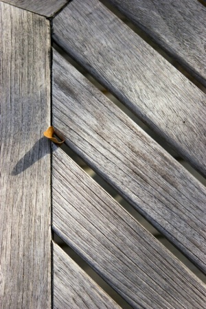 Leaf Trapped in Wooden Chair