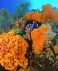 Reef Renewal