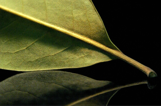 The Leaf, The Light