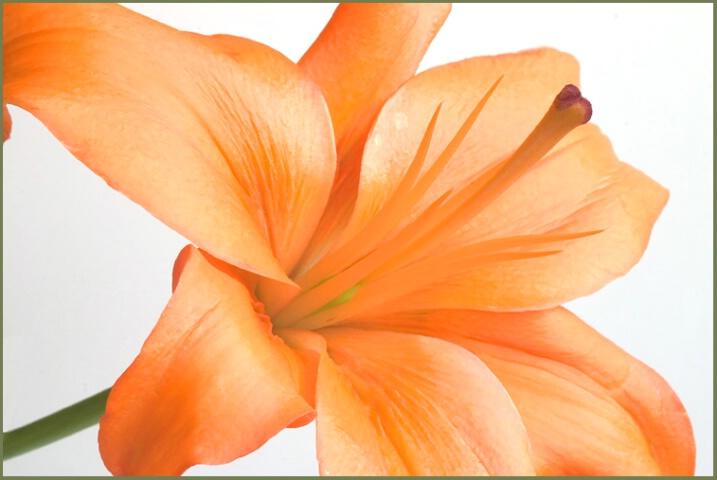 Orange Delight