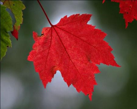 Autumn's Fire, Cass Lake, Minnesota