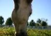 Horse 2