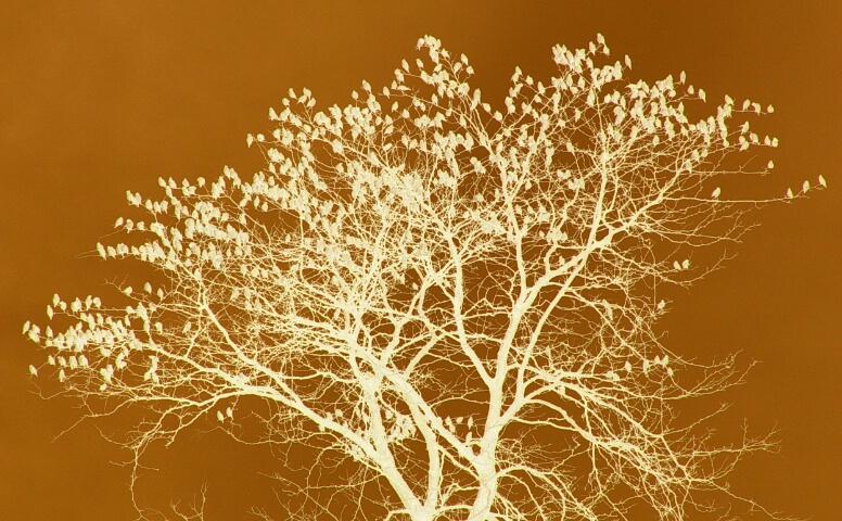 The Gossip Tree