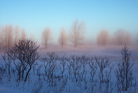 Winter Dawn