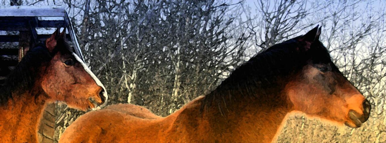 Painted Ponies - ID: 700665 © ashley nicholas