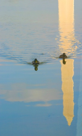 Washington DC Reflecting Pond