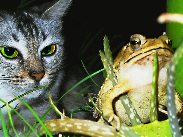 A Cat and Her Toad