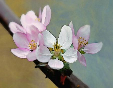 Delicate Blossoms