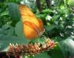 Wings of Light