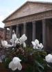 Pantheon Naturall...