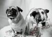 Ollie & Dot