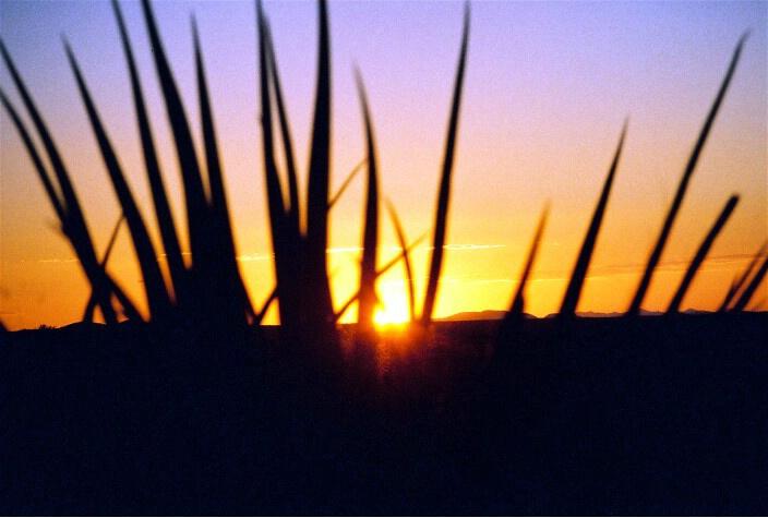 Blades of Sunset