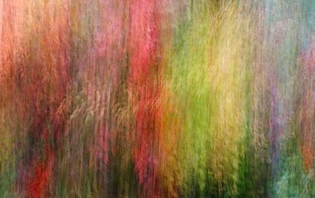 The Gardener's Rainbow 2