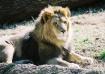 ~Simba's Prid...