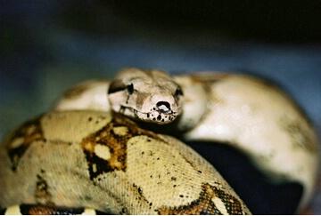my snake cupcake