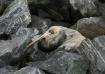 Pelican on the ro...