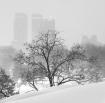 2005 Blizzard, NY...