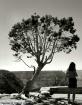 Tree & Tourist