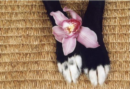 sweet paws