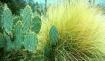 Desert Flora, Ari...