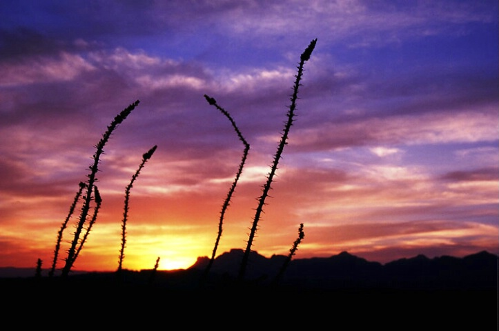Sunset and Ocotillo