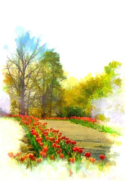 Tulip-Lined Walkway