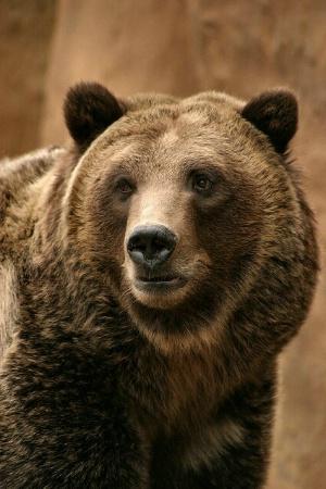 Teddy Bear.......