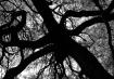 Oak Monster