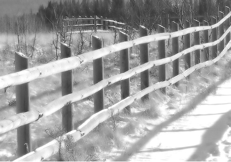 Fence Lines  Dream