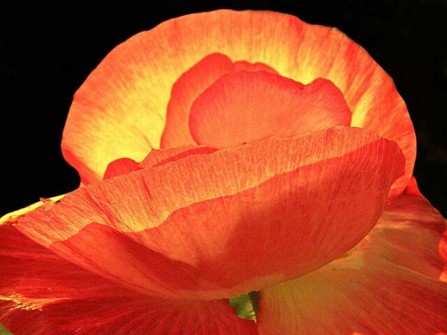 Flower in Glow