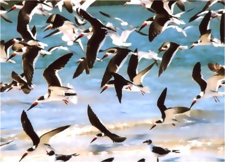 Skimmers in Flight