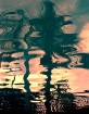 Palm Tree Reflect...