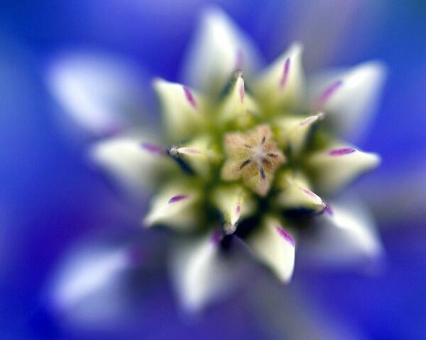Desert Wildflower