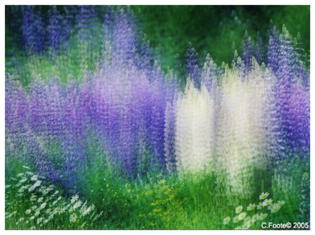 My Flower Dream....