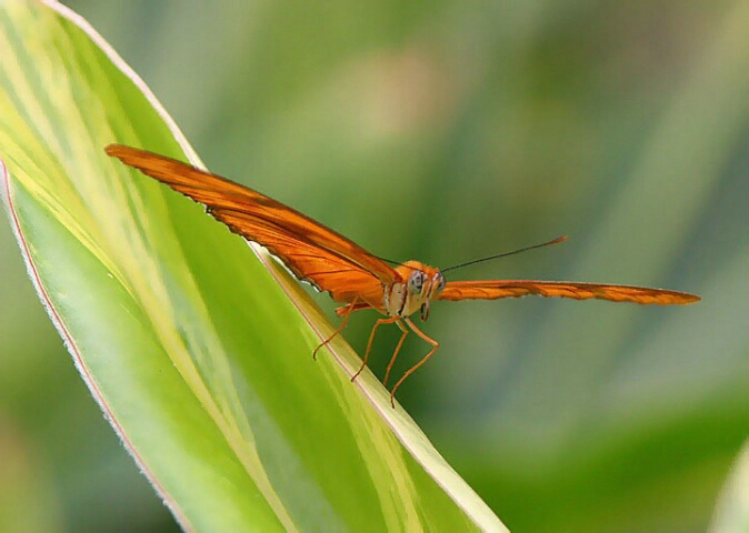 Preflight of the Dryas Julia