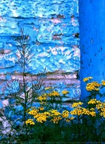 Blue Wall and Wildflowers, Duluth ,MN. Alley