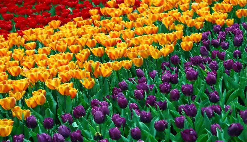 Spring Bulbs - 1