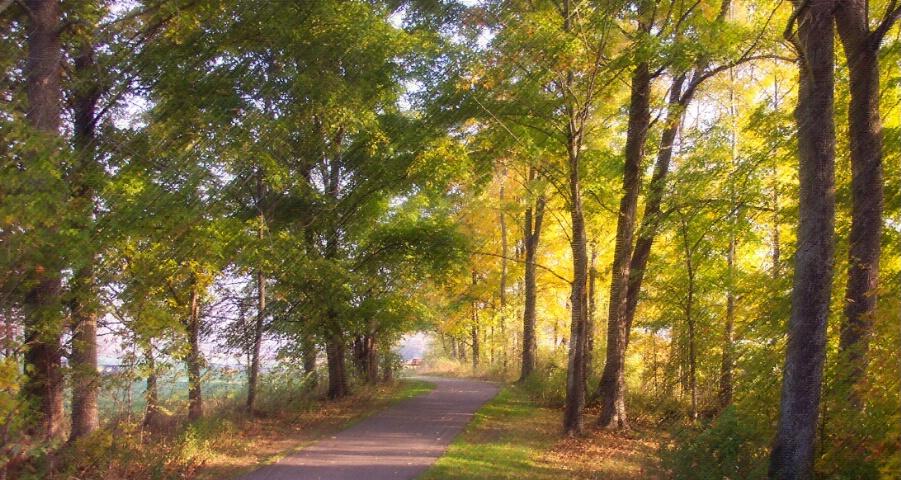 A Peaceful Stroll