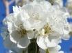 bloom.......