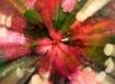 Bloom Zoom