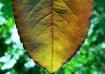 Autumnal Touchs I