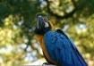 beautiful plumage