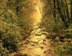 Sunet Stream