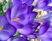 Morning Blooms