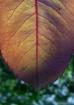 Autumnal Touchs I...