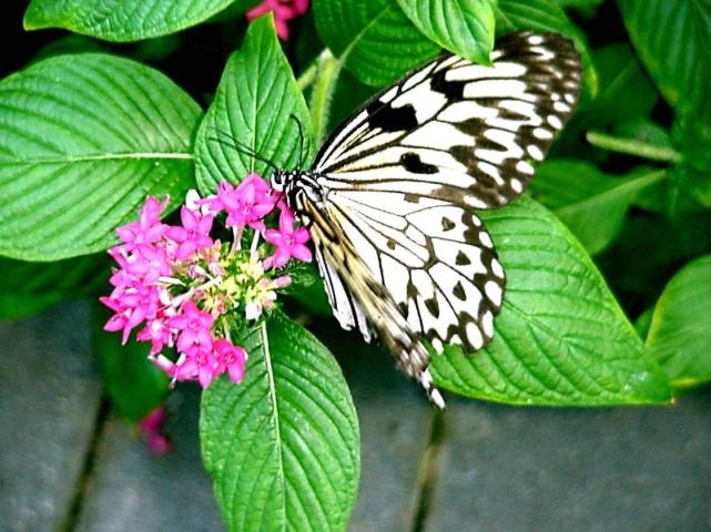 Butterfly Senses