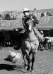 Montana Cowboy II