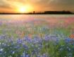 ...bluebonnet sun...